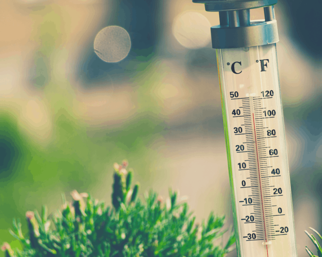 an image of a thermometer next to some plant