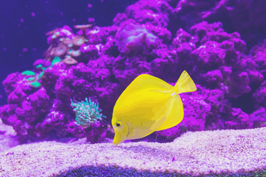 Yellow fish with a purple background