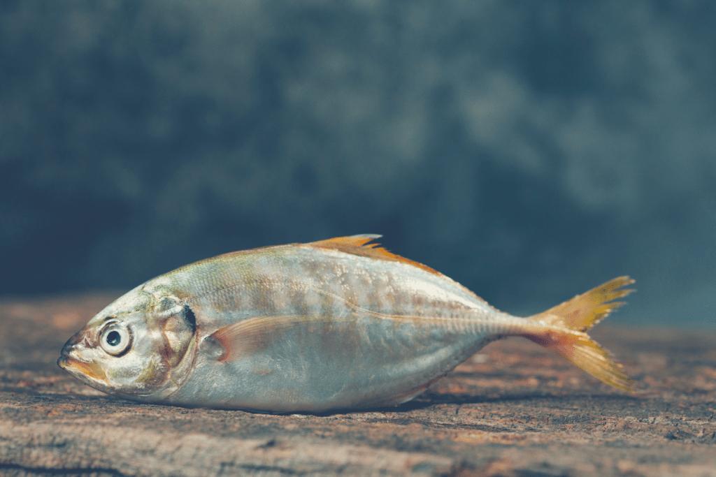 fish close to ground
