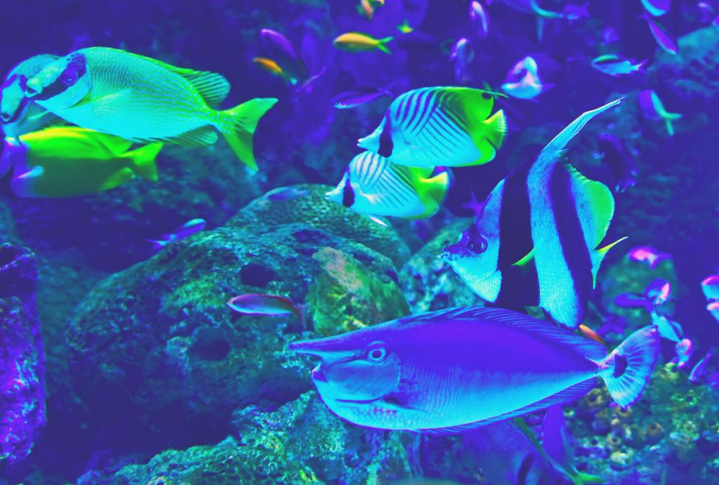 best fish for 10 gallon aquarium