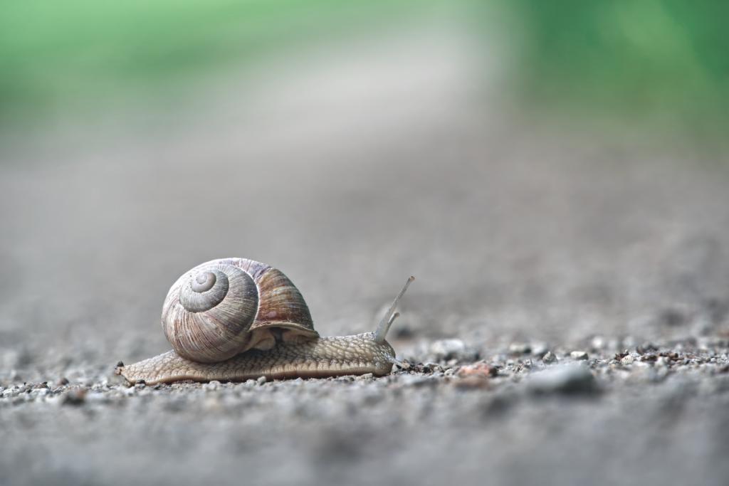best aquarium snail