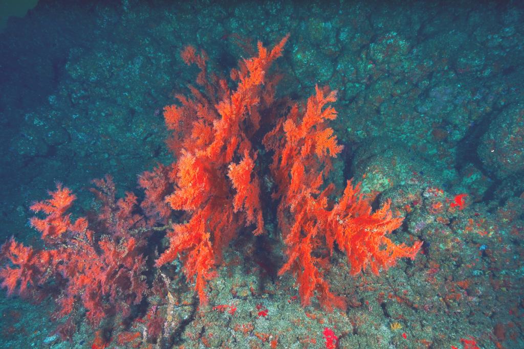 brown algae floating