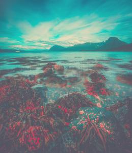 red slime algae with rocks